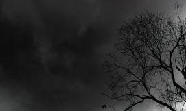 tree-400291_640
