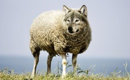 wolf-in-sheeps-clothing-2577813_640.jpg